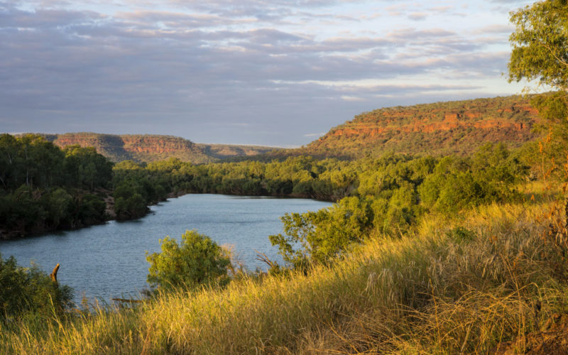 Head west to explore the spectacular gorge country of Gregory National Park. Known as Judbarra to the local indigenous people, it is the second largest park in the Territory.